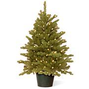 3' Feel Real® Hampton Spruce Small Pre-Lit Tree in Growers Pot