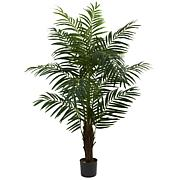 5 Ft. Areca Palm Tree