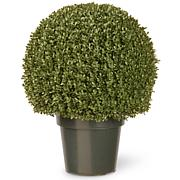 "Artificial 22"" Mini Boxwood Ball Tree in Growers Pot"