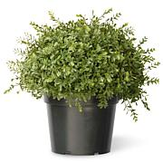 "Artificial Topiary Tree 15"" Mini Tea Leaf"