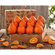 Hale Groves Honeybell Oranges