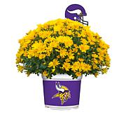 Officially Licensed NFL Team Mum Plant