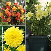 VanZyverden Color Your Garden Yellow Collection 13-piece Bulb Set
