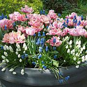 VanZyverden Spring Garden 50-piece Bulb Set