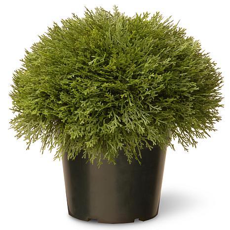 "15"" Artificial Topiary Juniper Bush"