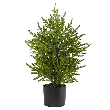 2 ft. Norfolk Island Pine Natural Look Artificial Tree in Decorativ...