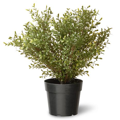 "Artificial 24"" Argentea Plant in Green Growers Pot"