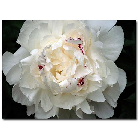 "Kurt Shaffer ""Perfect Peony"" Canvas Art"