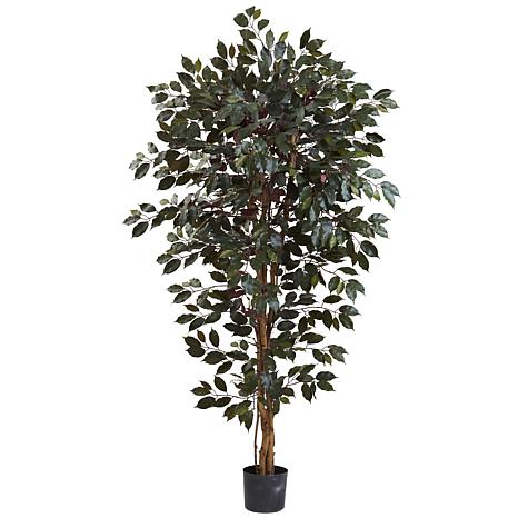 Nearly Natural 6 ft. 3-Trunk Capensia Ficus Tree