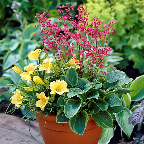 Perennial Patio Container Collection Set of 3 Roots