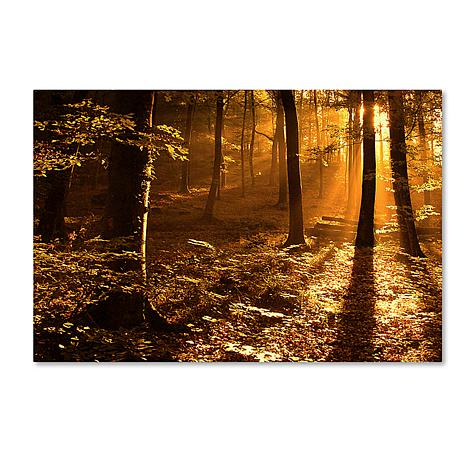 "Philippe Sainte-Laudy Medium ""Morning Light"" Print"