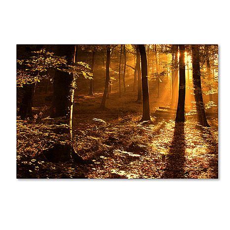 "Philippe Sainte-Laudy ""Morning Light"" Print"