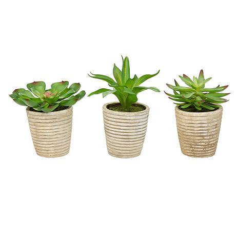 Pure Garden 3-Piece Lifelike Potted Faux Succulent Arrangement