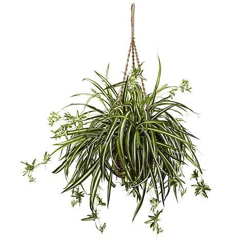 Spider Plant Hanging Basket