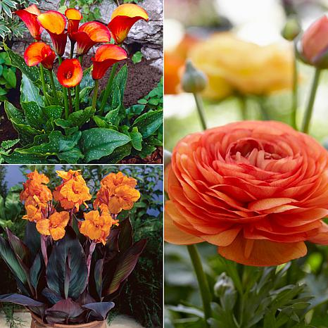 VanZyverden Color Your Garden Orange Collection 36-piece Bulb Set
