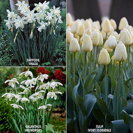 VanZyverden Color Your Garden White Collection 49-piece Bulb Set
