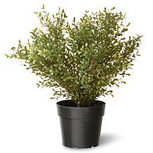 Winter Lane Artificial Topiary Argentea Plant in Base