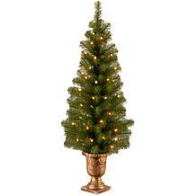 4' Montclair Spruce Entrance Tree w/Lights