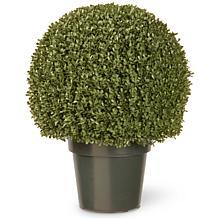 "Artificial 22"" Mini Boxwood Ball Tree in Growers Pot"
