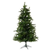 Fraser Hill Farms 12' Southern Peace Pine Tree