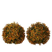Improvements Set of 2 Boxwood Spheres