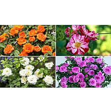 Leaf & Petal Designs 4-piece Color Rush Mini Roses