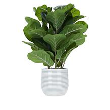 "South Street Loft 24"" Fiddle Leaf Plant in Ceramic Pot"