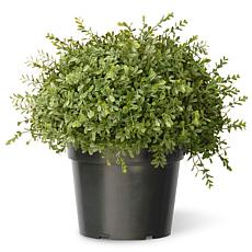 1-1/4' Artificial Topiary Mini Tea Leaf 1-Ball