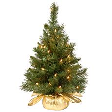 2' Majestic Fir Tree w/Lights - Gold