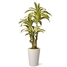 "21"" Artificial Dracaena Plant"