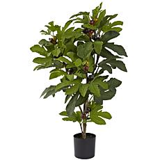 32 in. Fig Silk Tree