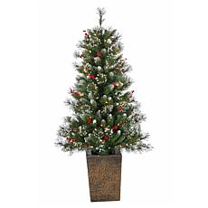 4' Potted Hard Mixed Needle Glazier Pine Tree - 100 Clear Lights