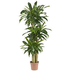 57 in. Corn Stalk Dracaena Silk Plant Real Touch
