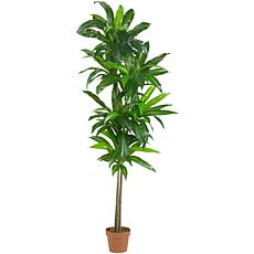6 Ft. Dracaena Silk Plant Real Touch