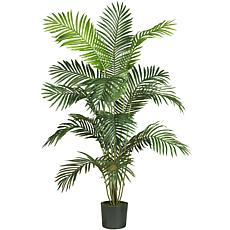 6' Paradise Palm