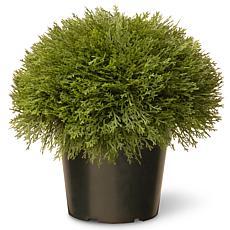 "Artificial 15"" Juniper Bush in Green Growers Pot"