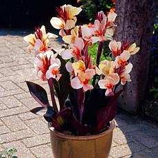 Cannas Angel Martin Set of 5 Bulbs