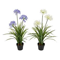 Gerson Assorted Artificial Agapanthus in Pot 2-pack