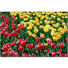 Giclee Print - Red and Yellow Tulips II
