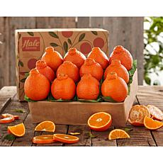 Hale Groves Honeybell Oranges - 1 Tray