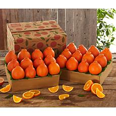 Hale Groves Honeybell Oranges - 2 Trays