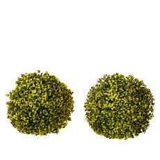 Improvements Set of 2 Boxwood Spheres