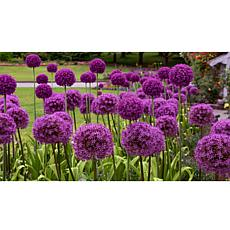Leaf & Petal Designs 5-piece Purple Sensation Allium Bloom Pad