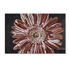 "Lois Bryan ""Silvery Pink"" Canvas Art"