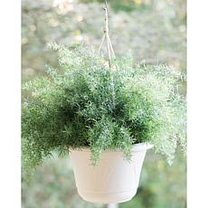 Lucca Self Watering Hanging Basket 13 in