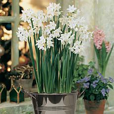 Paperwhite Kit with Artisan Decorative Planter