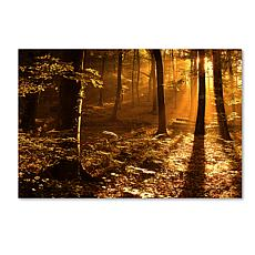 "Philippe Sainte-Laudy ""Morning Light"" Print"