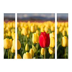 "Pierre Leclerc ""Red Tulip"" Multi-Panel Art - 30"" x 41"""
