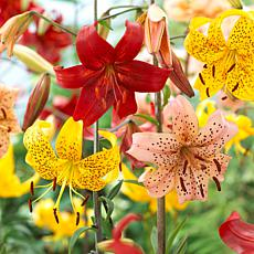 Tiger Lilies Value Blend Pack Set of 18 Bulbs