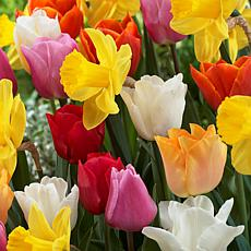 Tulips & Narcissus Pot Luck Mixture Set of 100 Bulbs